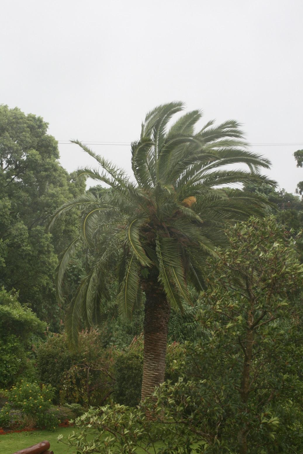Taifu182
